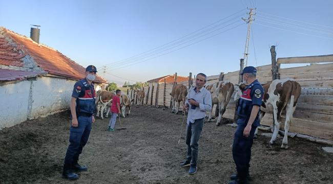 Kırıkkale'de kaybolan 18 kurbanlık hayvanı jandarma buldu
