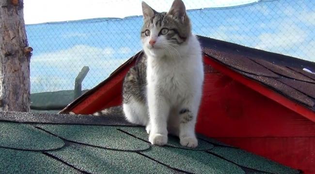 """İnsanlığın içini ısıtan """"Kedi Köyü"""" uygulaması Kırıkkale'de"""