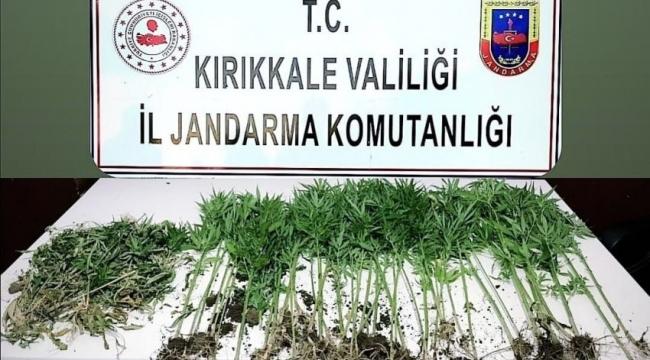 Kırıkkale'de kenevir operasyonu